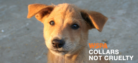 Learn more about Collars Not Cruelty